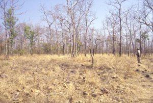 वन की छवि