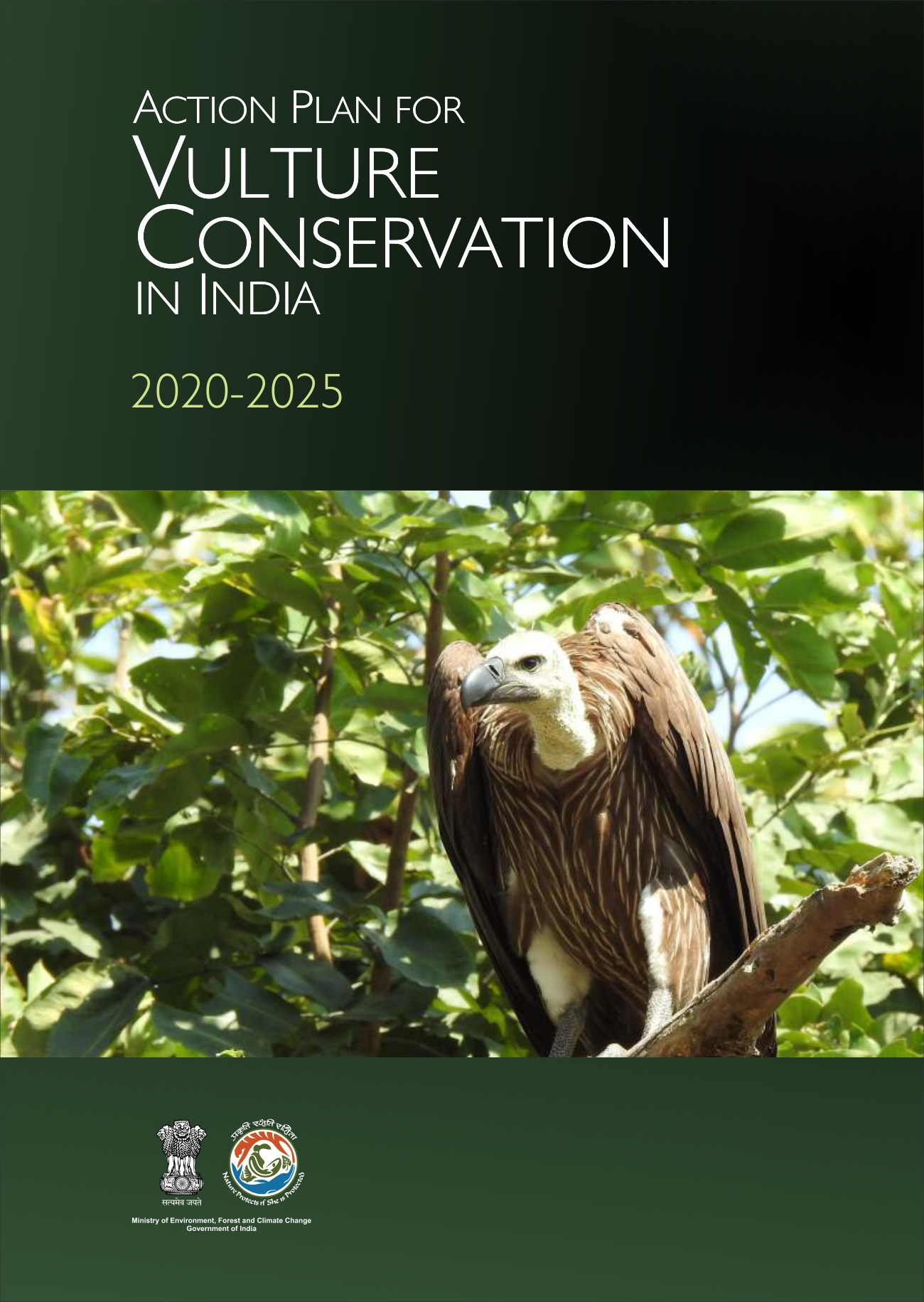 Image of cover of Action Plan for Vulture Conservation in Indian 2020-2025